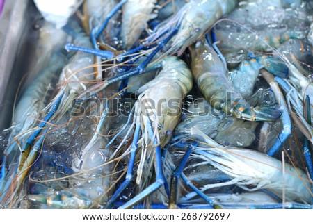 Fresh shrimp in the market - stock photo
