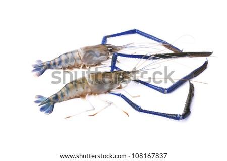 Fresh shrimp isolated on a white background - stock photo