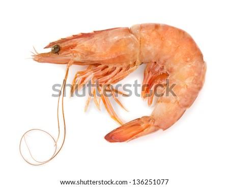 Fresh shrimp isolated on white - stock photo