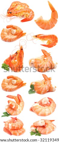 Fresh shrimps - stock photo