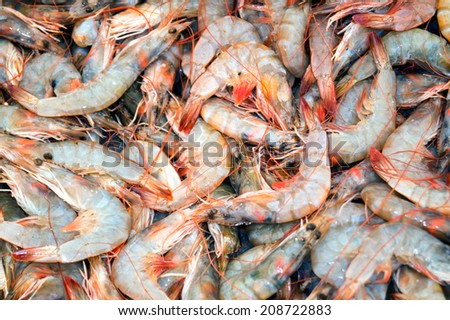 fresh shrimps from the Aeagean sea for cooking - stock photo