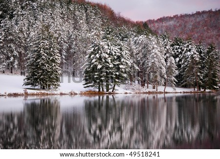 fresh snow on a pine forest, beside a reflection on a lake - stock photo