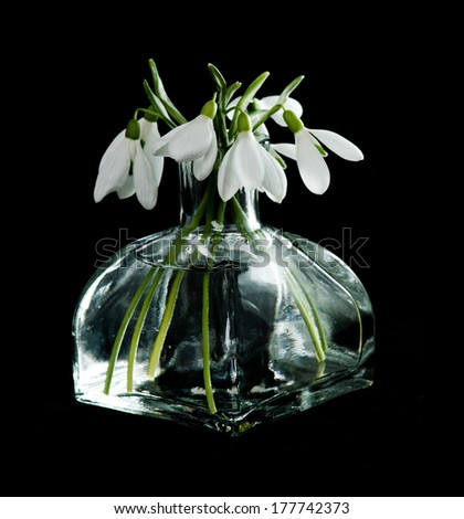 Fresh snowdrops in transparent vase on black background - stock photo