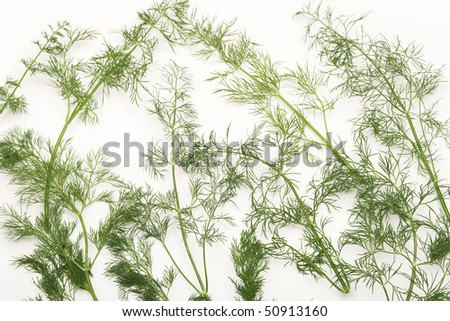 Fresh spring dill background. - stock photo