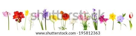 Fresh spring flowers isolated on white - stock photo