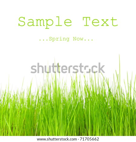 Fresh spring grass with easy removable text. - stock photo