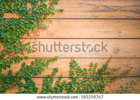 Fresh spring green grass and leaf plant over wood plank brown texture background - stock photo