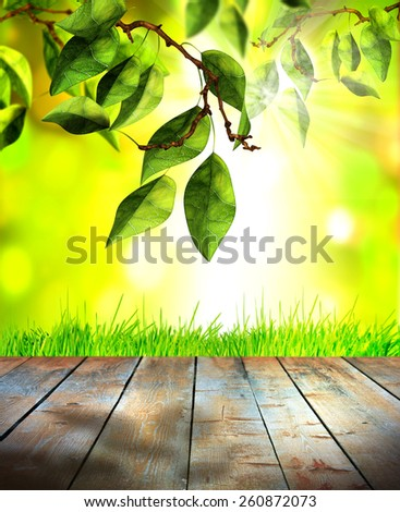 Fresh spring green grass and leaves with green bokeh, sunlight and wood floor. Beauty natural background,selective focus - stock photo