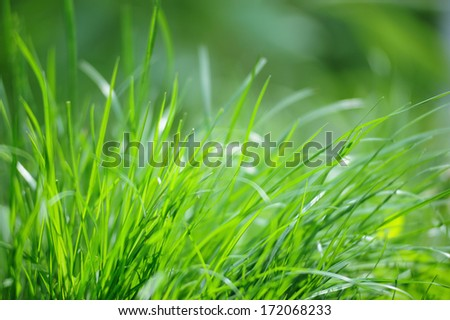 Fresh spring green grass background - stock photo