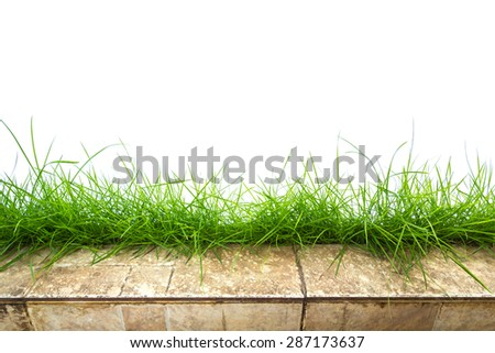 Fresh spring green grass panorama isolated on white background. - stock photo