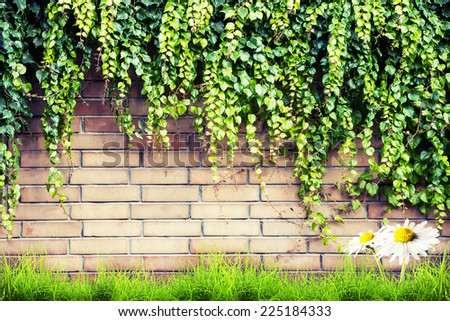 Fresh spring green leaves plant and grass with camomile flower over brick wall background - stock photo
