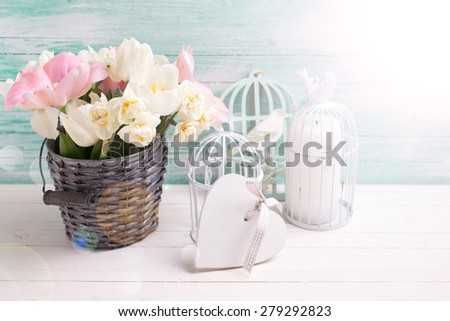 Fresh  spring white and pink  tulips and narcissus in grey bucket, heart, candles in decorative bird cages in ray of light  on white painted wooden background against turquoise wall. Selective focus.  - stock photo