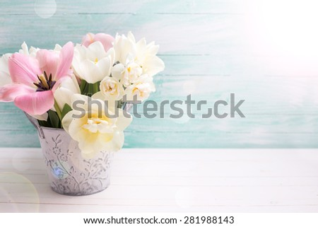 Fresh  spring white and pink  tulips and narcissus in  grey bucket in ray of light on white painted wooden background against turquoise wall. Selective focus. Place for text.   - stock photo
