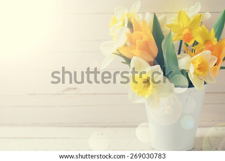 Fresh  spring yellow narcissus and  tulips flowers in bucket in ray of light  on white  painted wooden planks. Selective focus. Place for text. Toned image.  - stock photo