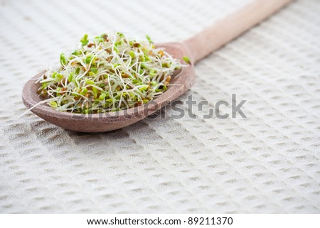 Fresh sprouts on a wooden spoon - stock photo