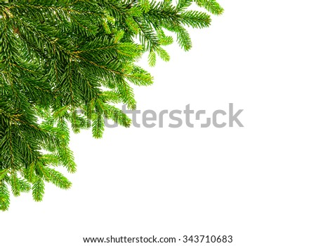 Fresh spruce sprig isolated on white background. Border from christmas tree branch - stock photo