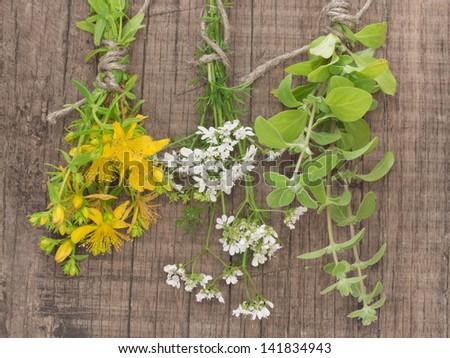fresh St John's wort, coriander and rosemary - stock photo