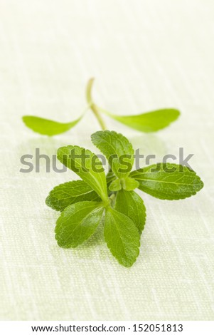 Fresh stevia sweet leaf isolated on green background. Healthy sugar alternative. - stock photo