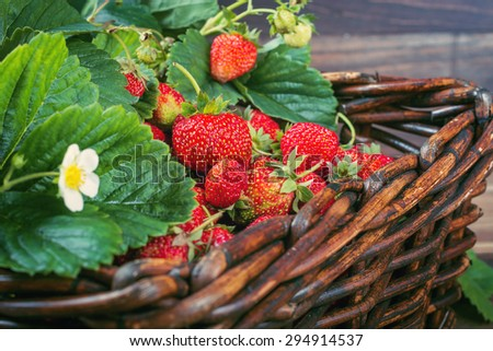 Fresh strawberries with green leaves in a basket. Closeup. Selective focus. - stock photo