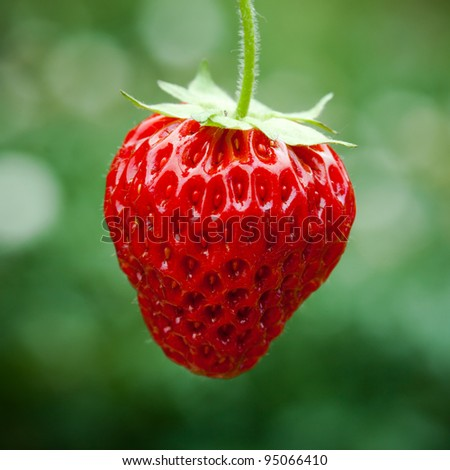 Fresh strawberry, natural green background - stock photo