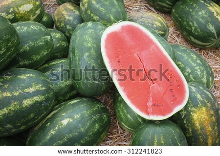 fresh, sweet and ripe watermelon in agricultural fair - stock photo