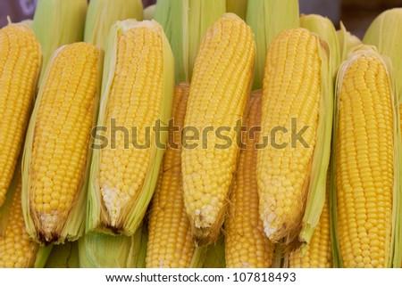 Fresh sweetcorn - stock photo