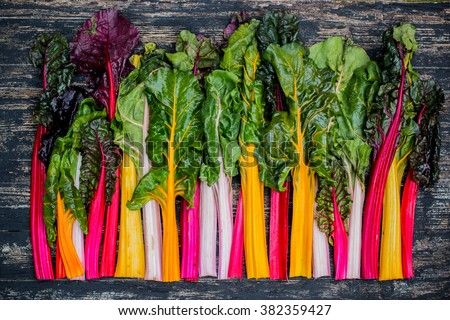 Fresh swiss rainbow chard - stock photo