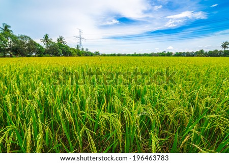 Fresh terraced rice field over the mountain range and beautiful blue sky - stock photo