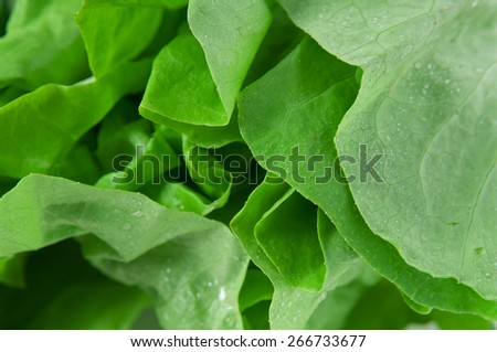 Fresh texture of salad leaves - stock photo
