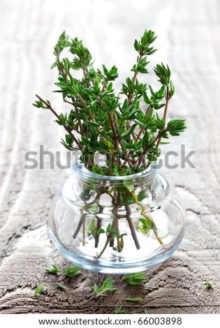 fresh thyme in a glass - stock photo