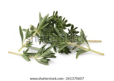 Fresh thyme isolated on white background - stock photo