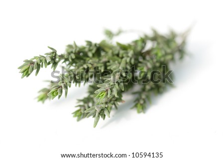 fresh thyme on white, shallow depth of field - stock photo