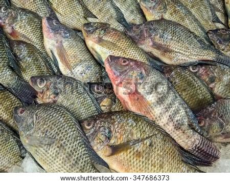 fresh tilapia fishes at the fish market, Thailand - stock photo