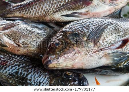 Fresh Tilapia or Oreochromis locally - stock photo