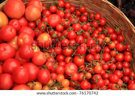 Fresh tomatoes from farm in a basket - stock photo