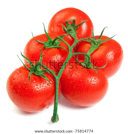 Fresh tomatoes with water drops isolated on a white background - stock photo