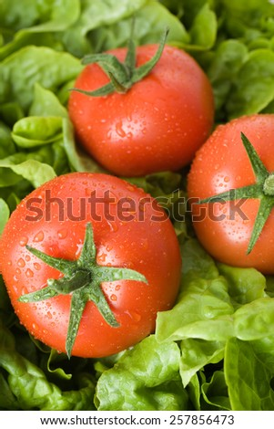 Fresh tomatoes with water drops on fresh green salad - stock photo