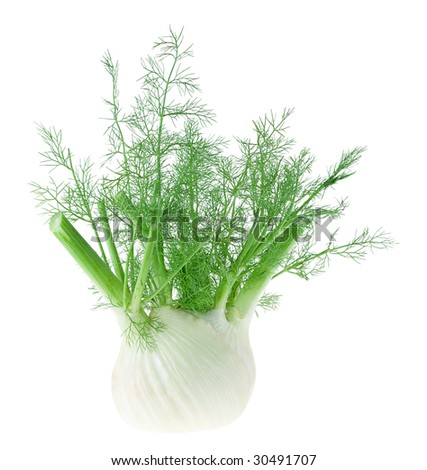 Fresh, trimmed fennel - stock photo