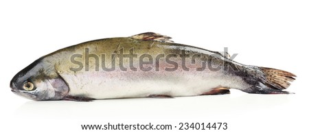 Fresh trout fish isolated on white - stock photo