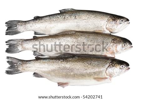 fresh trout on white background - stock photo