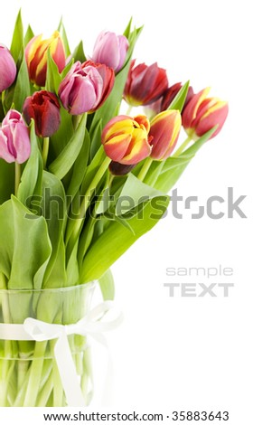 fresh tulips on white background (with sample text) - stock photo