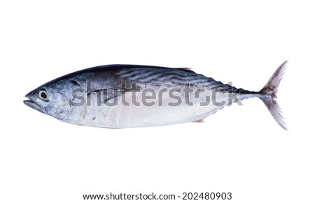 Fresh tuna fish isolated on white background  - stock photo