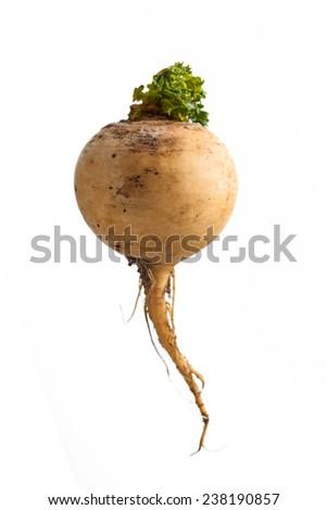 fresh turnip isolated on white background - stock photo