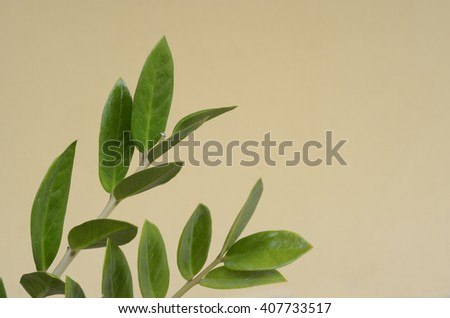 Fresh unknown green leaf - stock photo