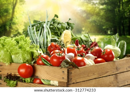 fresh vegetables and garden  - stock photo