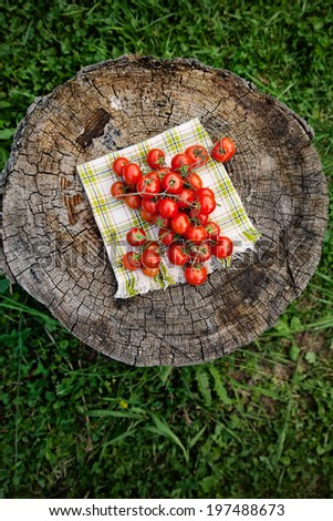 Fresh vegetables. Cherry tomatoes on wood in vegetable garden - stock photo