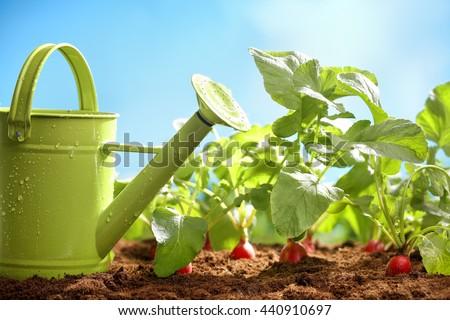 Fresh vegetables in the garden - stock photo