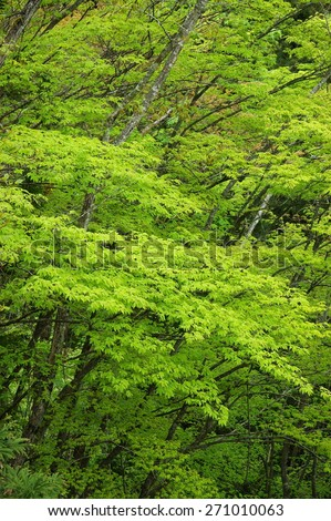 fresh verdure.  - stock photo