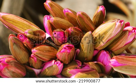 Fresh water lilly bouquet, group of beautiful flower in pink vibrant, this bloom at Mekong Delta of Vietnam, beauty of nature in nice flowers bud and petal on yellow background - stock photo
