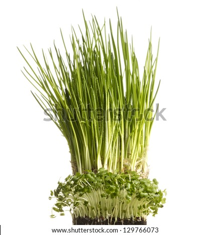 Fresh watercress with roots - stock photo